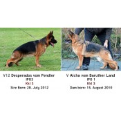 World Class German Shepherd Imports